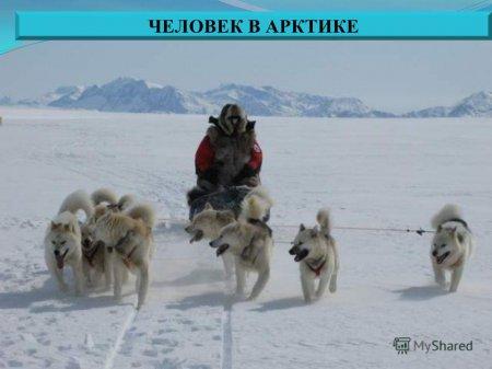 chelovek_v_arktike.jpg
