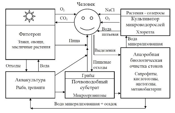 chelovek_v_ekol_sisteme.jpg